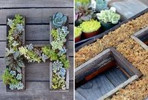 Vertical Gardening / Don't have a big yard?  Grow your garden up!  Cool pins we found.