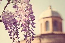 Flowers & Parks in Rome