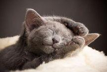 kissat / Ei mitään tekemistä, tylsää.