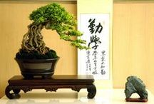 Bonsai / Tree / by Marco A F R