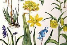 ▲N A T U R A L E Z A▲ / Creo que en otra vida fui botánica o jardinera, o en la siguiente capaz.