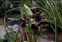 Orchidées / Orchidées.