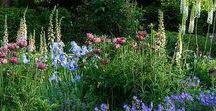 Au jardin... Des merveilles !