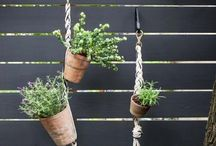 Terrace||Garden