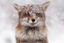 critters / animal cuteness