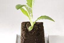Seeds & Seedlings