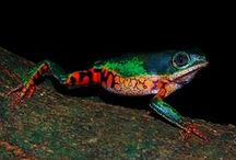 natural world  - frogs and more
