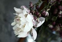 belles fleurs / flowers... natural beauty