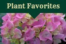Favorite Plants for New England / Plants for the New England Gardener