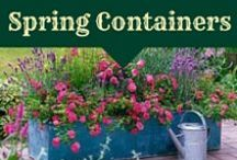 Container Planting for the Spring / best container plants and container planting designs for Spring in New England