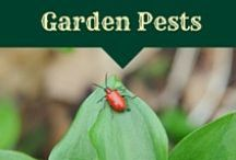 Pests in the Garden / how to handle common garden pests