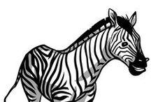 Zebra / All things Zebra!