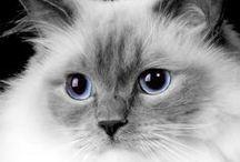 schatten van katten / lieve, mooie, ondeugende katten