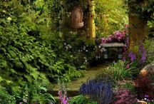 Plantes / Jardin