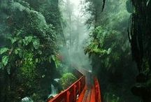| Captivating Chile |