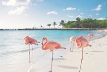 | Must See - Caribbean |