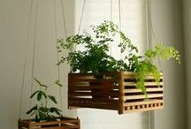 TODO.green / growing tips and ideas, indoor and out.