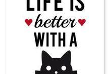 Ein Leben ohne Katze ist nicht lebenswert. / ♡♡♡ / by sabrina schurig