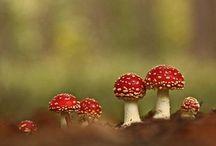 Mushroom Queendom
