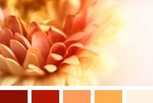 Color palettes : Orange / #colors, #palette, #challenge, #värit