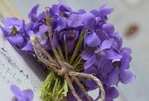 Blurple Flowers / Blue to purple flowers
