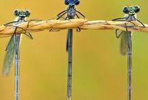 Macro & Wildlife Photography / Macro & Wildlife Photography - Inspirational Photo Selection by Photoaxe.com