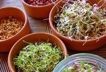 Vida Sana / Leches vegetales, jugos naturales, probioticos...