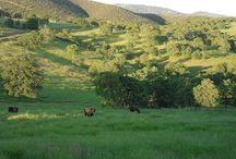 Visit our ranch!!