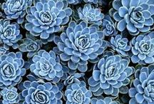 Succulents & Plants & Μushrooms