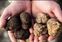 Black & White Truffles  - Truffes blanche et noire / Truffles are expensively rare mushroom type jewels that grow near oak and hazelnut trees. Tartufi bianchi,