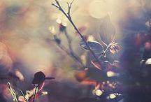Herbst | Autumn