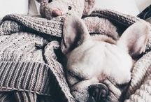 Süße Tiere | Cute Animals