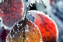 Winter | Winter