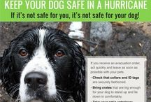 Pet Safety Tips / Infographics and safety tips for pets