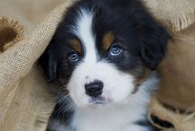 Puppies & other Cuties... / by Heike McKay
