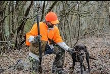 Hunting Dogs / Everything you need to know about hunting with man's best friend! Your hunting dog is essential to the hunt: treat 'em right! / by Hunter Ed