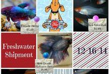 B&B Pet Stop: Freshwater