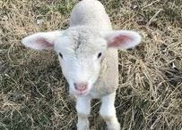 Farm Friends / Meet the farm friends that live at Highland.
