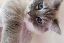 Gatos & gatitos