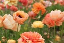 Gardens I love / by Stephanie Tucker