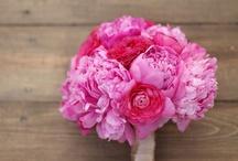 Bridal Bouquets   Hot Pink