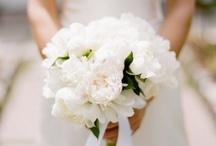 Bride   Bridal Bouquet   White