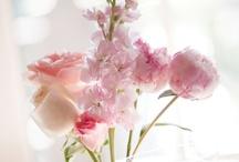 Reception Decor   Centerpieces   White & Pale Pink