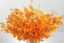 Reception Decor   Centerpieces   White & Orange