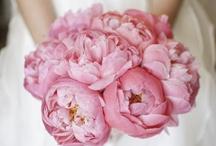 Bride   Bridal Bouquet   Hot Pink