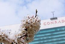 MY photo(shizen)