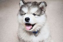 Adorable animals / by Samantha Steeves