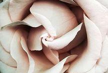 Rose Quartz ♡