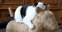 Cat Gyms, Climbers and Scratchers / DIY and commercial cat gyms, climbers and scratcher ideas.