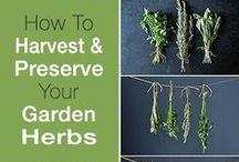 H E R B S / I favor pure herbs  ✿